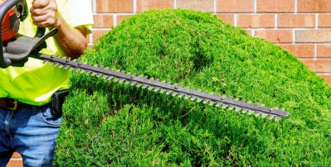 Best Features To Consider In a Pole Hedge Trimmer